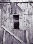 Window by Christy Camarca