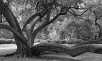 Tree by Mark Jagodzinski