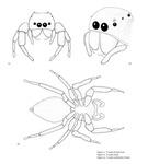 Scientific illustration by Andrea Abbas